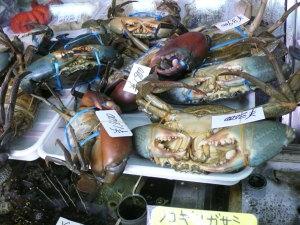 迫力のある蟹たち