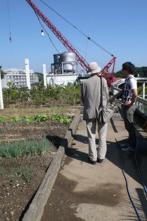 沢田マンション・屋上菜園