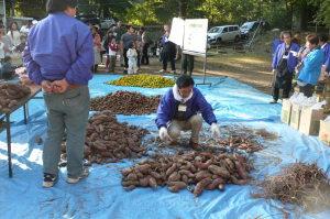 収穫・サツマイモ・キーウィ・ミカン