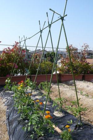 野菜の支柱