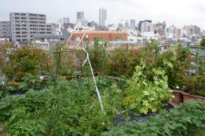 今の屋上菜園