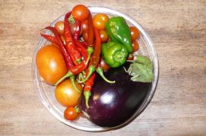 収穫・屋上菜園