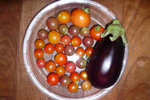 トマトの収穫最盛期