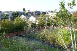 夏バテ気味の屋上菜園