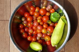 今日の収穫・トマト・ピーマン・キュウリ
