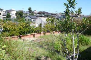 夏枯れの屋上菜園