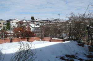 屋上菜園の雪
