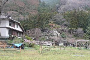 武蔵五日市の協同村