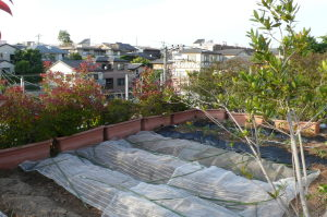 屋上菜園の今