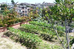 現在の屋上菜園
