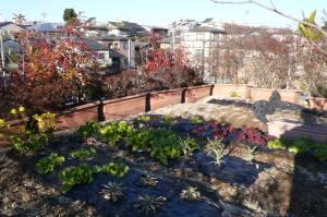 冬の屋上菜園