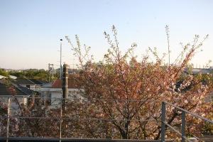 府中の家・屋上と桜
