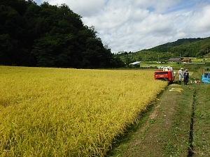 豊岡稲刈り