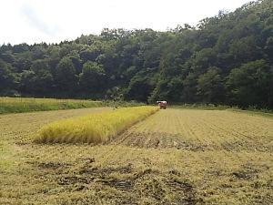 豊岡稲刈り11