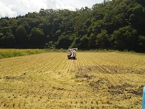 豊岡稲刈り12