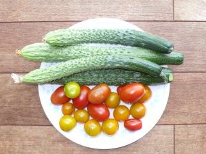 キュウリ シャキット トマト