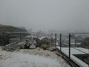 雪の屋上庭園